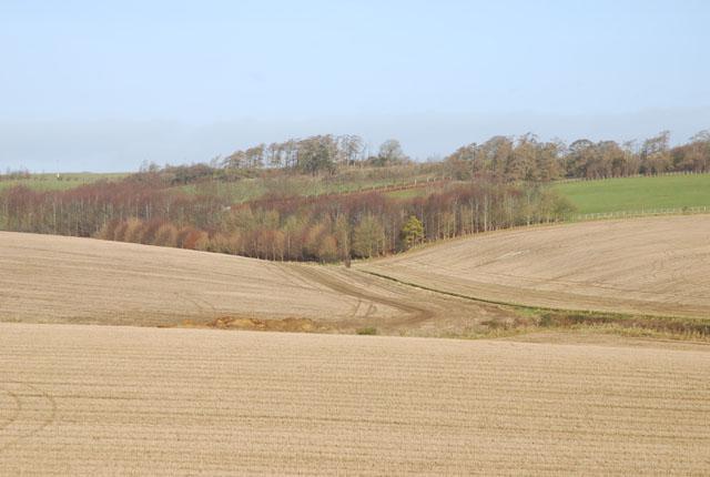 View of Crockerton Wood