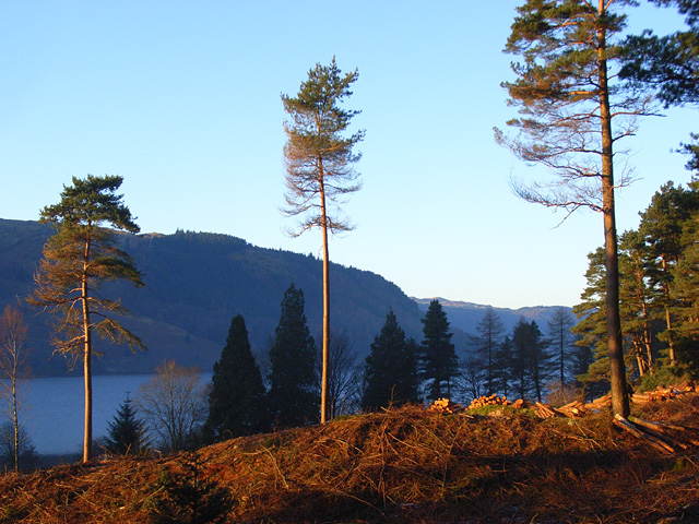 Forestry above Thirlmere