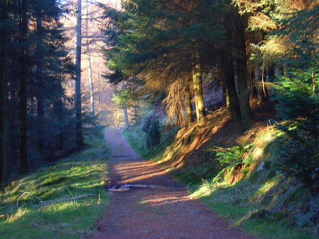 Permissive path in the forest above Wythburn