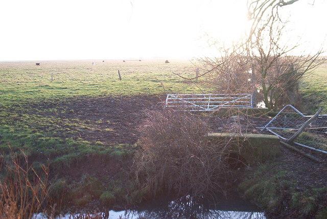 Cattle grazing land, Great Bells Farm, Eastchurch