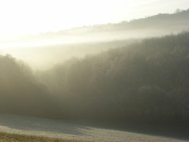 Woodland in mist, Bix Bottom