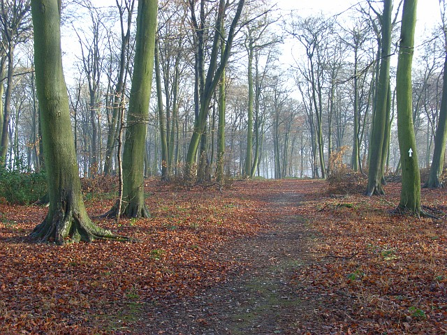 Park Wood, Maidensgrove