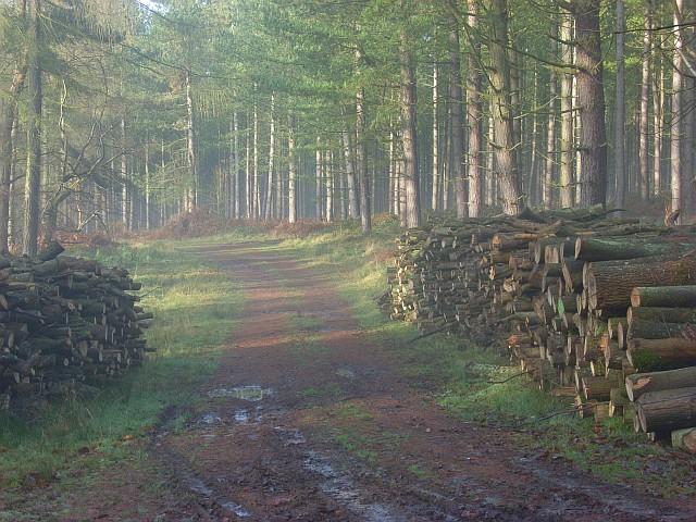 Balham's Wood, Stonor
