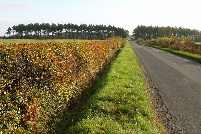 Road by Lathocker