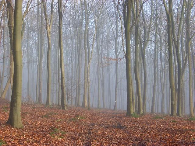 Greenfield Wood