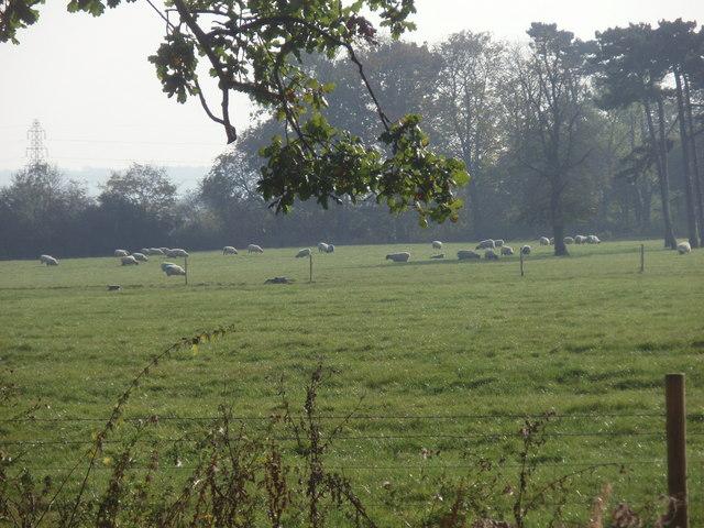 Second Park, Brackenhurst