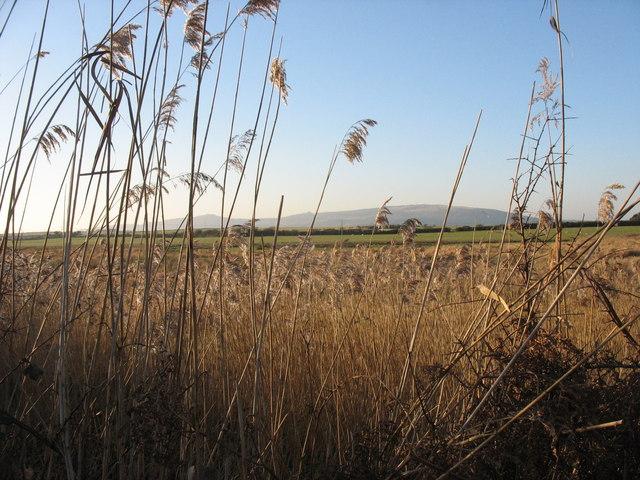 Wetlands in the Soch valley
