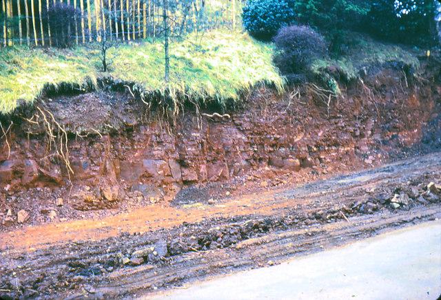Gypsum bands in marl escarpment