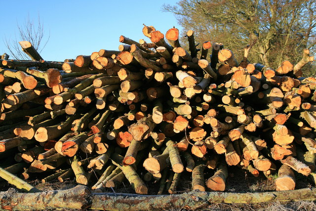 Wood pile, Amisfield