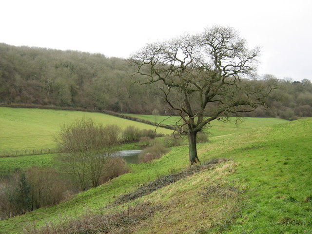 Pond near Splatts Wood