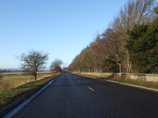 Hopetoun Wood by the A903