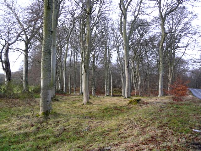 Calrossie Wood