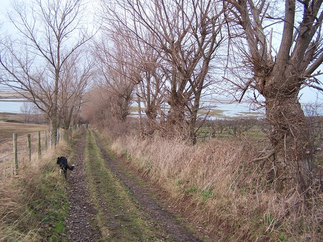 "Track with willow ""hedge"""