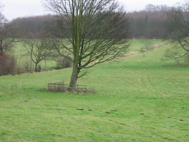 Parkland at Goodnestone