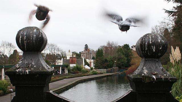 Swan Pool, Priory Park, Great Malvern