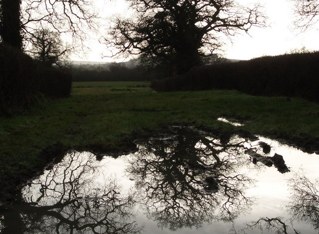 Bishops Down: Drove after December rain