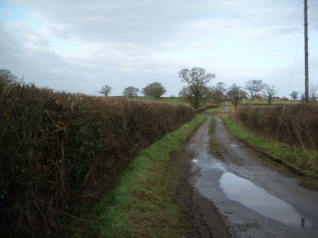 Bishops Down: Drove road, looking north