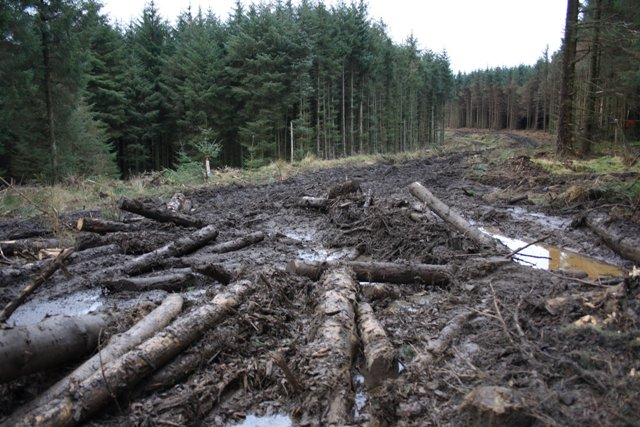 Forest Track, Guisborough Woods