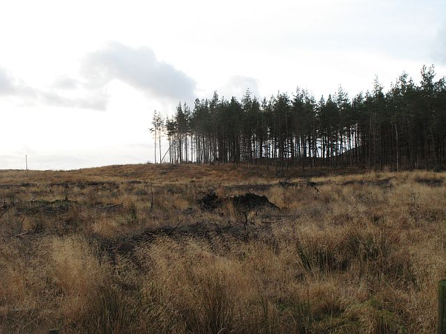 Braes of Foss Forest