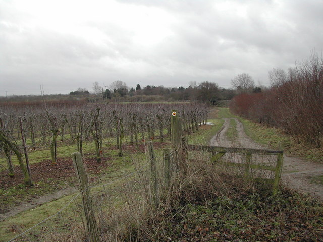 Footpath from Ham Green to Wetham Green