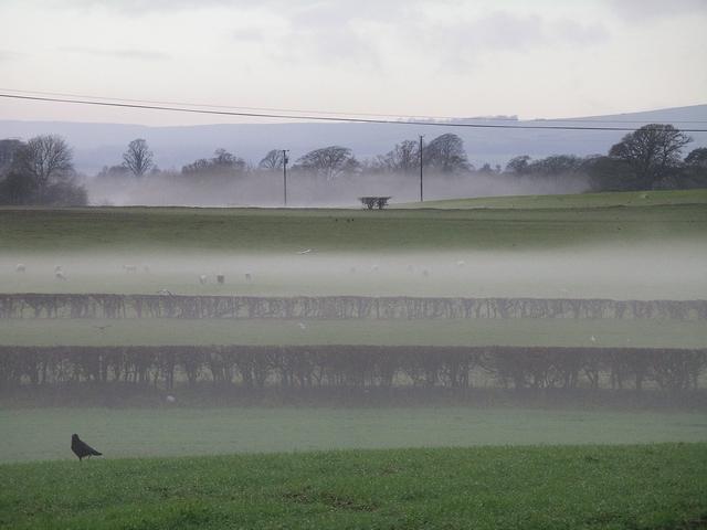 Waves of mist