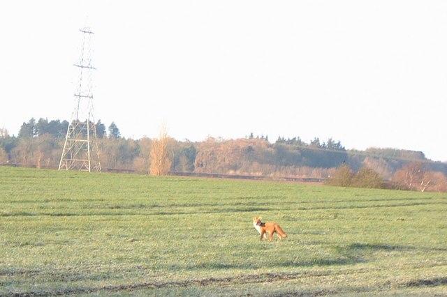 Fox and pylon