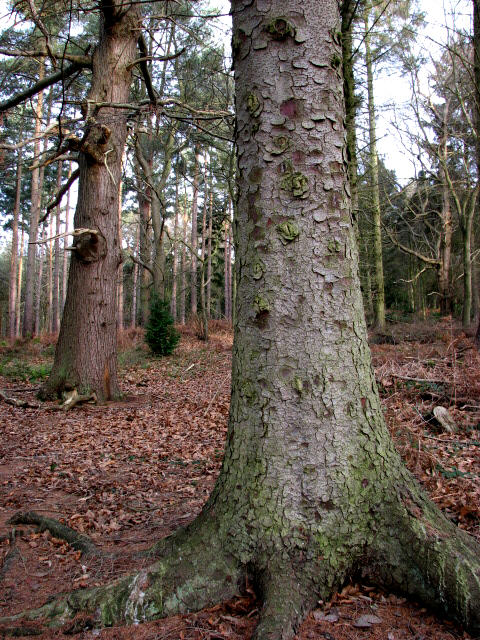 Gnarly tree trunks