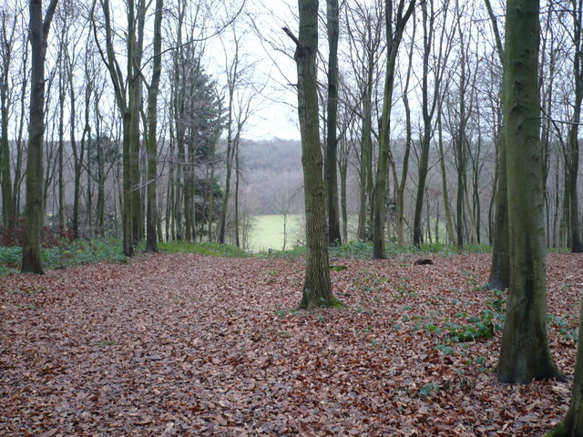 Shoreham woods, looking across to Meenfield Wood
