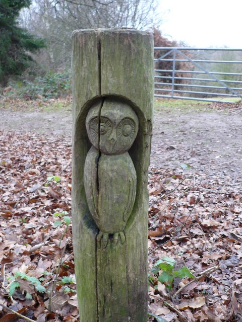 Owl carving on a post in Shoreham Woods