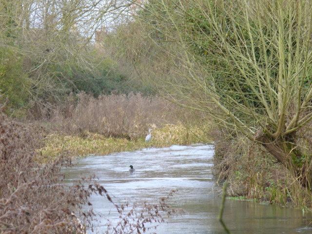 River Coln, Fairford