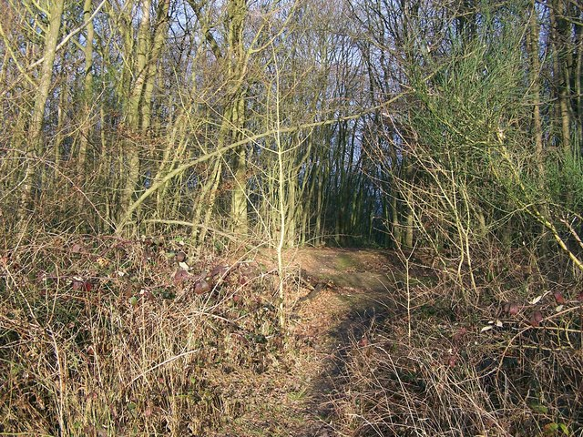 Great Chattenden Wood