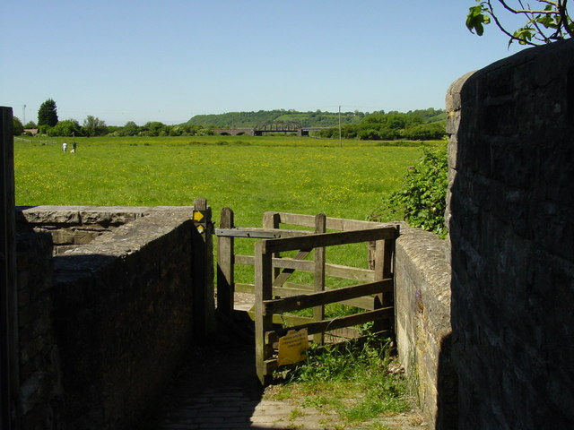 Water meadows, Langport