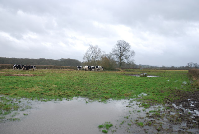 Waterlogged bridleway at Holebrook Green Farm