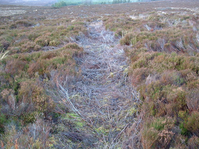 Track through the heather