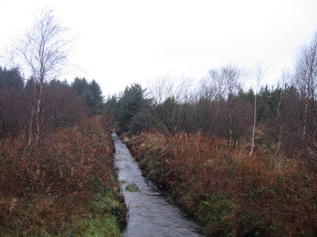 Fforest Conifferaidd  ger Cross Inn / Coniferous Forest near Cross Inn