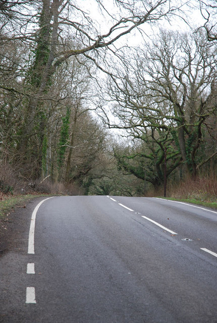A3030 between two woods