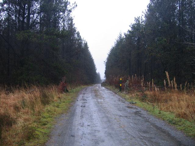 Ffordd Fforest  ger Nebo/ Forest Road near Nebo