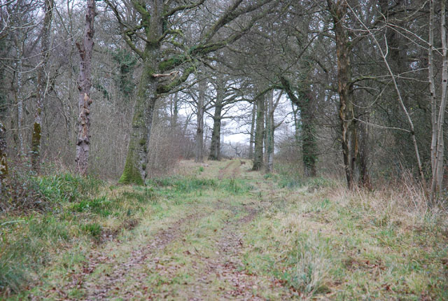 Track through Brickles Wood