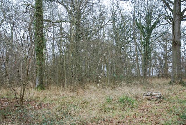 Brickles Wood