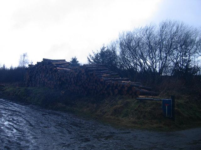 Mynedfa Fforest ger Penwch / Forest Entrance near Penwch