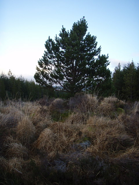 Rogue tree?