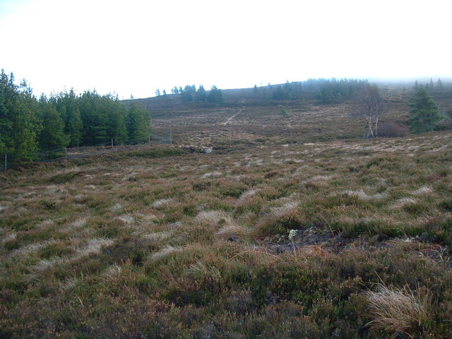 Woodland above Lyne of Carron