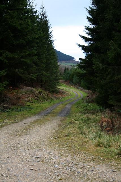 Forest Track Under Greenhow Bank