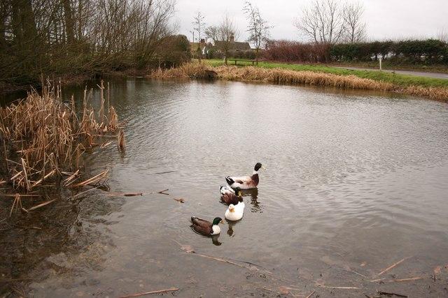 Greetham pond