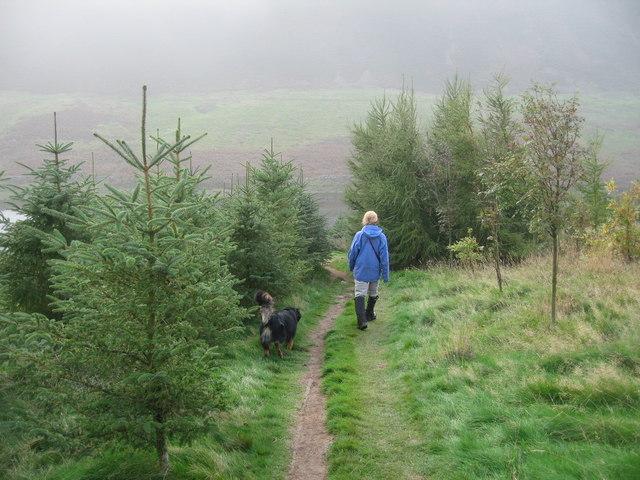 Through woodland towards Threipmuir Reservoir