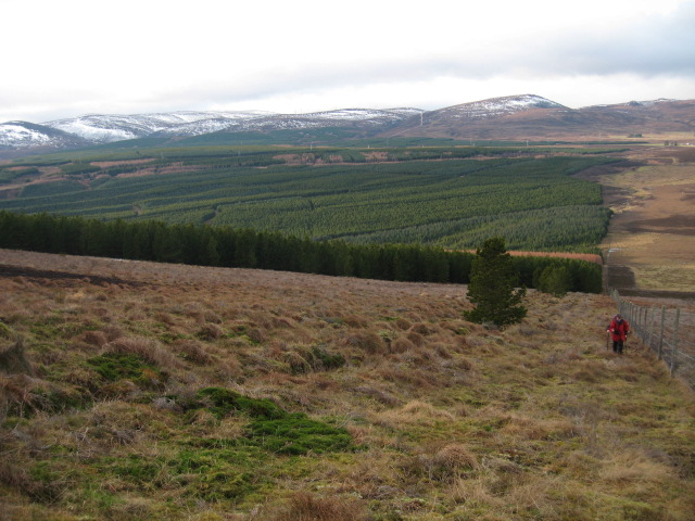 Edge of forestry approaching Cnoc an t-Sabhail
