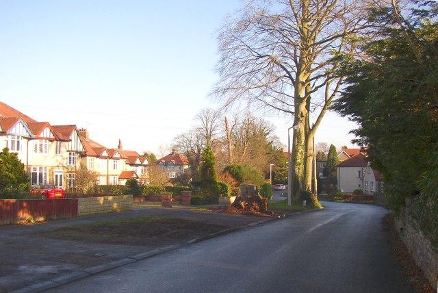 Tree stump, Peacock Lane, Hest