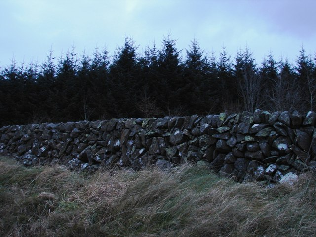 Woods, Wall and Grass