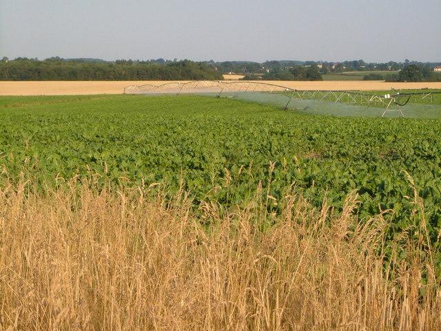 Centre pivot irrigation, Lynn