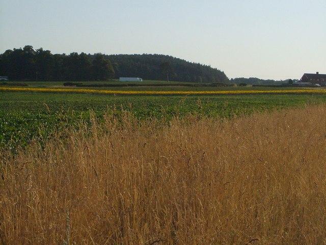 Landscape near Lynn